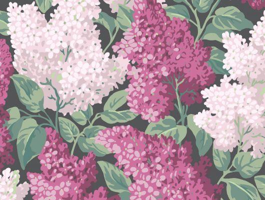 """Обои Cole & Son - """"Lilac"""" арт. 115/1001- это изображение всеми любимого пышного кустарника сирени  цвета мадженты и розовых румян на угольном фоне. Английские обои, Обои Cole & Son, Каталог обоев, Botanical Botanica, Обои для гостиной, Обои для спальни"""