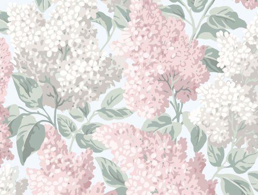"""Обои Cole & Son - """"Lilac"""" арт. 115/1002- это изображение всеми любимого пышного кустарника сирени цвета пуантов и сизого на берёзовом фоне. Салон обоев, магазин обоев, купить обои Москва., Botanical Botanica, Обои для гостиной, Обои для кухни, Обои для спальни"""