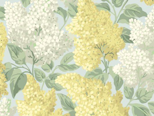 """Обои Cole & Son - """"Lilac"""" арт. 115/1003- это изображение всеми любимого пышного кустарника сирени лимонного и оливкового цвета на голубом фоне. Обои в Москве, адреса магазинов, каталог обоев, Botanical Botanica, Обои для гостиной, Обои для кухни, Обои для спальни"""
