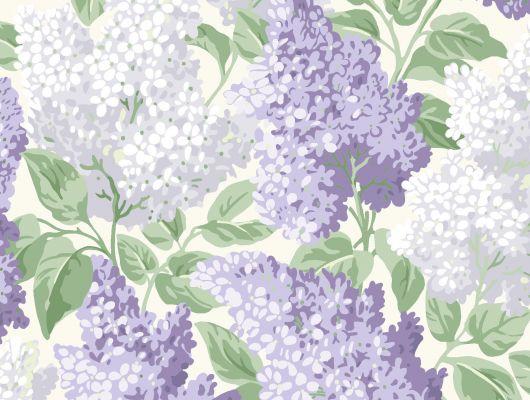 """Обои Cole & Son - """"Lilac"""" арт. 115/1004 - это изображение всеми любимого пышного кустарника сирени в сиреневом и сизом цвете на светлом фоне. Обои Cole & Son, английские обои, заказать онлайн, Botanical Botanica, Обои для гостиной, Обои для кухни, Обои для спальни"""