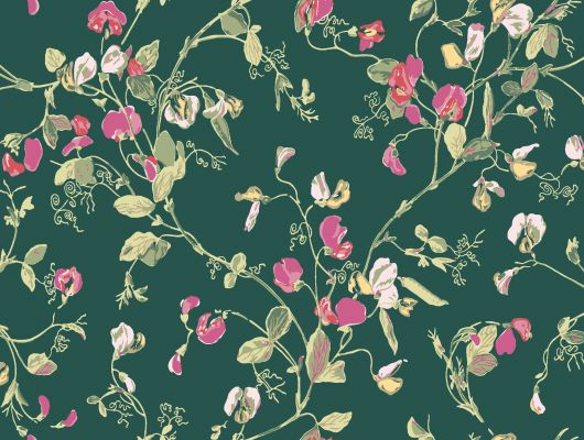 """Обои Cole & Son - """"Sweet Pea"""" арт. 115/11033. Обновлённый дизайн представлен в современных сочетаниях: вишнёвый и маджента на фоне цвета вер-гинье, охра и розовый на пергаментном фоне. Обновлённый дизайн представлен в современных сочетании вишнёвого и мадженты на фоне цвета вер-гинье. Английские обои, Обои Cole & Son, Каталог обоев, Botanical Botanica, Обои для гостиной, Обои для кухни, Обои для спальни"""