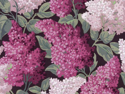 """Обои Cole & Son - """"Lilac Grandiflora"""" арт. 115/15045 - это изображение всеми любимого пышного кустарника сирени  цвета мадженты и розовых румян на угольном фоне, являются болеее крупным вариантом арт. 115/1001. Обои в гостиную, стильные обои, флизелиновые обои, Botanical Botanica, Обои для гостиной, Обои для спальни"""