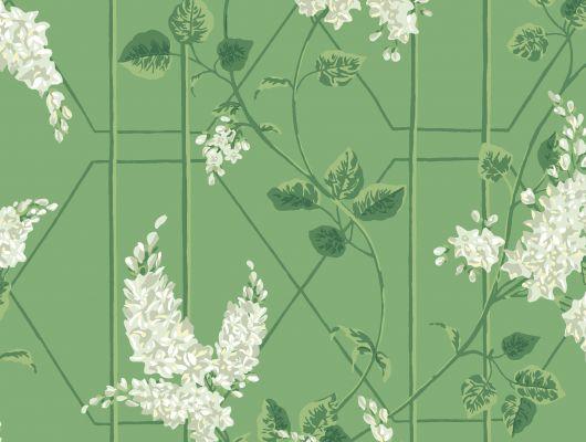 """Обои Cole & Son - """"Wisteria"""" арт. 115/5016. Классичекий мотив трельяжной решетки, так полюбившийся многим из нас, дополнен соцветиями глицинии и будет украшать Ваши стены в течении всего года! Обои в гостиную, стильные обои, флизелиновые обои, Botanical Botanica, Обои для гостиной, Обои для спальни"""