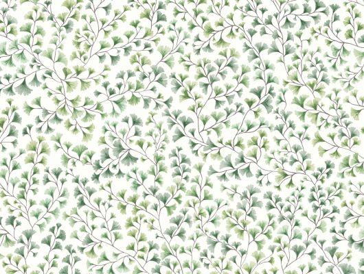 """Обои Cole & Son - """"Maidenhair"""" арт. 115/6018. На обоях изображены ветви очень стойкого дерева Гинко в акварельной технике оливкового цвета на белом фоне. Обои для спальни, выбрать в каталоге, заказать доставку, Botanical Botanica, Обои для гостиной, Обои для кухни"""