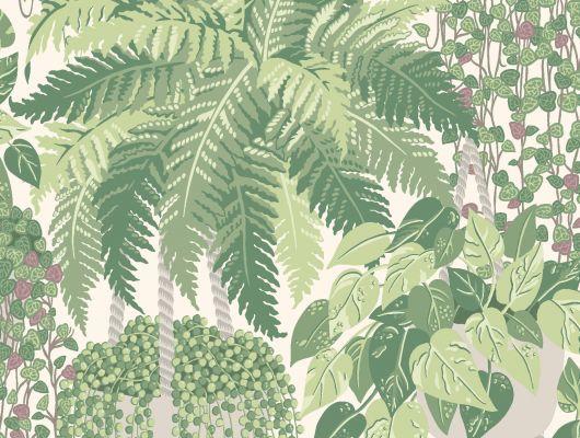 """Обои Cole & Son - """"Fern"""" арт. 115/7021. Пышный сад в стиле Британского ботанического мотива с изображением многолетних суккулентов и папоротников лиственно-зелёного и оливкового цвета на белом фоне. Обои в Москве, адреса магазинов, каталог обоев, Botanical Botanica, Обои для гостиной, Обои для кухни, Обои для спальни"""
