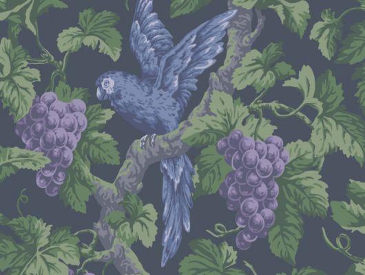 Флизелиновые обои из Англии, с рисунком синего попугая, присевшего насладится спелым лиловым виоградом на темном фоне, где купить, The Pearwood Collection, Английские обои, Флизелиновые обои