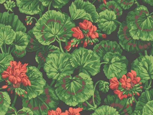 Флизелиновые обои пр-во Великобритания коллекция Seville от Cole & Son, рисунок под названием Geranium яркий цветочный принт на черном фоне. Обои для гостиной, обои для спальни. Бесплатная доставка, купить обои, большой ассортимент, Seville, Дизайнерские обои, Обои для гостиной, Обои для спальни, Хиты продаж