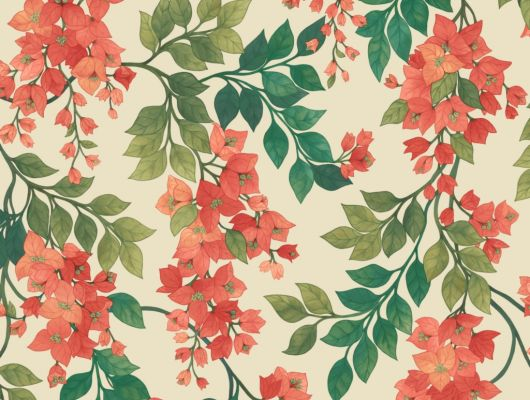 Флизелиновые обои пр-во Великобритания коллекция Seville от Cole & Son, переливающийся цветочный рисунок под названием Bougainvillea на светлом фоне. Обои для спальни, обои для кухни, обои для гостиной. Купить обои в салоне Одизайн, большой ассортимент, бесплатная доставка, Seville, Новинки, Обои для гостиной, Обои для кухни, Обои для спальни