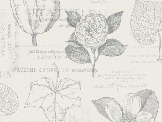 Флизелиновые обои из Швеции коллекция Northern FEELINGS от Collection For Walls под названием Botanical. Рисунок обоев выполнен в стиле ботанические иллюстрации коричневого цвета на светлом фоне. Обои для кухни, обои для гостиной. Купить обои, большой ассортимент, бесплатная доставка, Northern FEELINGS, Архив, Обои для гостиной, Обои для кабинета, Обои для кухни, Обои для спальни, Флизелиновые обои