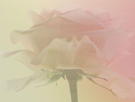 Обои art 2214 Флизелин Eco Wallpaper Швеция, Eco Rose, Renaissance, Архив, Обои для квартиры, Обои для спальни, Фотообои