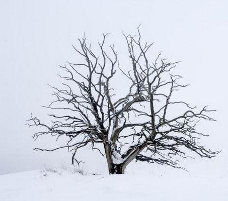Обои art 2445 Флизелин Mr Perswall Швеция, Eco Photo, Архив, Обои для квартиры, Распродажа, Распродажные фотообои, Фотообои