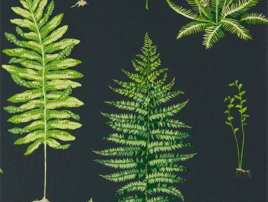 Крупные листья на черном фоне можно посмотреть в коллекции The Glasshouse от производителя Sanderson арт.216634 в шоу-руме в Москве, The Glasshouse, Обои для гостиной