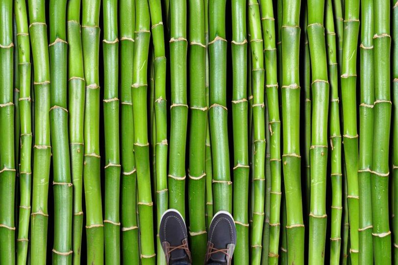 09. Bamboo