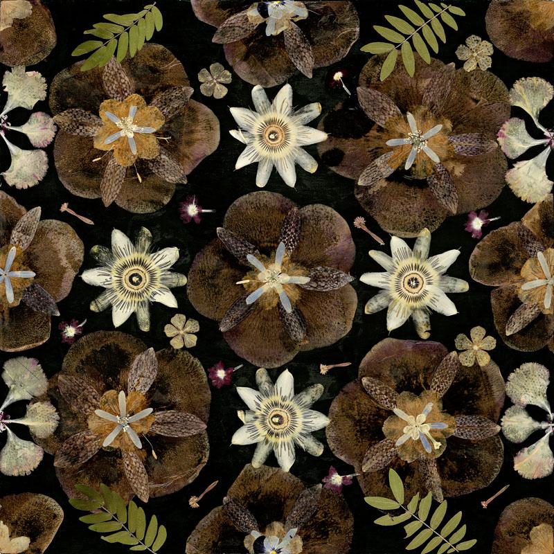 Цветочный ковер с изображением гербария в черно коричневых оттенках от шведской фабрики Kasthall