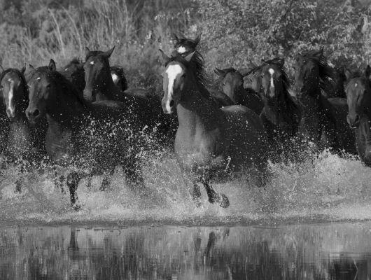 """Фотообои Aura """"Global Fusion"""", арт. G45278. Фотообои с изображением животных.Большой выбор в салоне.Купить в интернет-магазине, с доставкой в Москве., Global Fusion, Обои для гостиной, Обои для кабинета"""