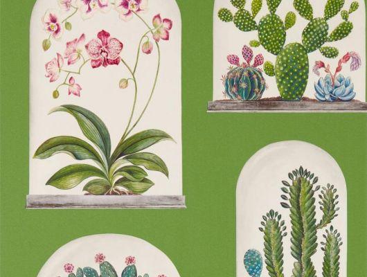 Подобрать обои для гостиной Terrariums ас орхидеями на зеленом фоне  из коллекции The Glasshouse от производителя Sanderson в салоне., The Glasshouse, Обои для гостиной, Обои для кухни, Обои для спальни, Обои с цветами