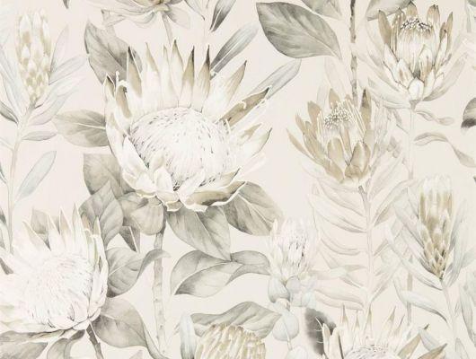 Флизелиновые обои для маленькой прихожей дизайн King Protea из коллекции The Glasshouse от Sanderson арт.216647 с рисунком крупных цветов на светлом фоне можно выбрать на сайте odesign.ru, The Glasshouse, Обои для гостиной, Обои для спальни, Обои с цветами
