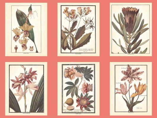 Обои бумажные с клеевой основой York - Ashford House Toiles II,арт. AF1931. Обои с постерами растений на красном фоне для кухни.Купить в Москве.Заказать в интернет-магазине. Доставка, Ashford House Toiles II, Обои для кабинета, Обои для кухни