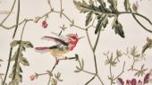 Cole-and-Son_The_Contemporary_Collection-Fabrics_Hummingbirds_F62-1001_Crop