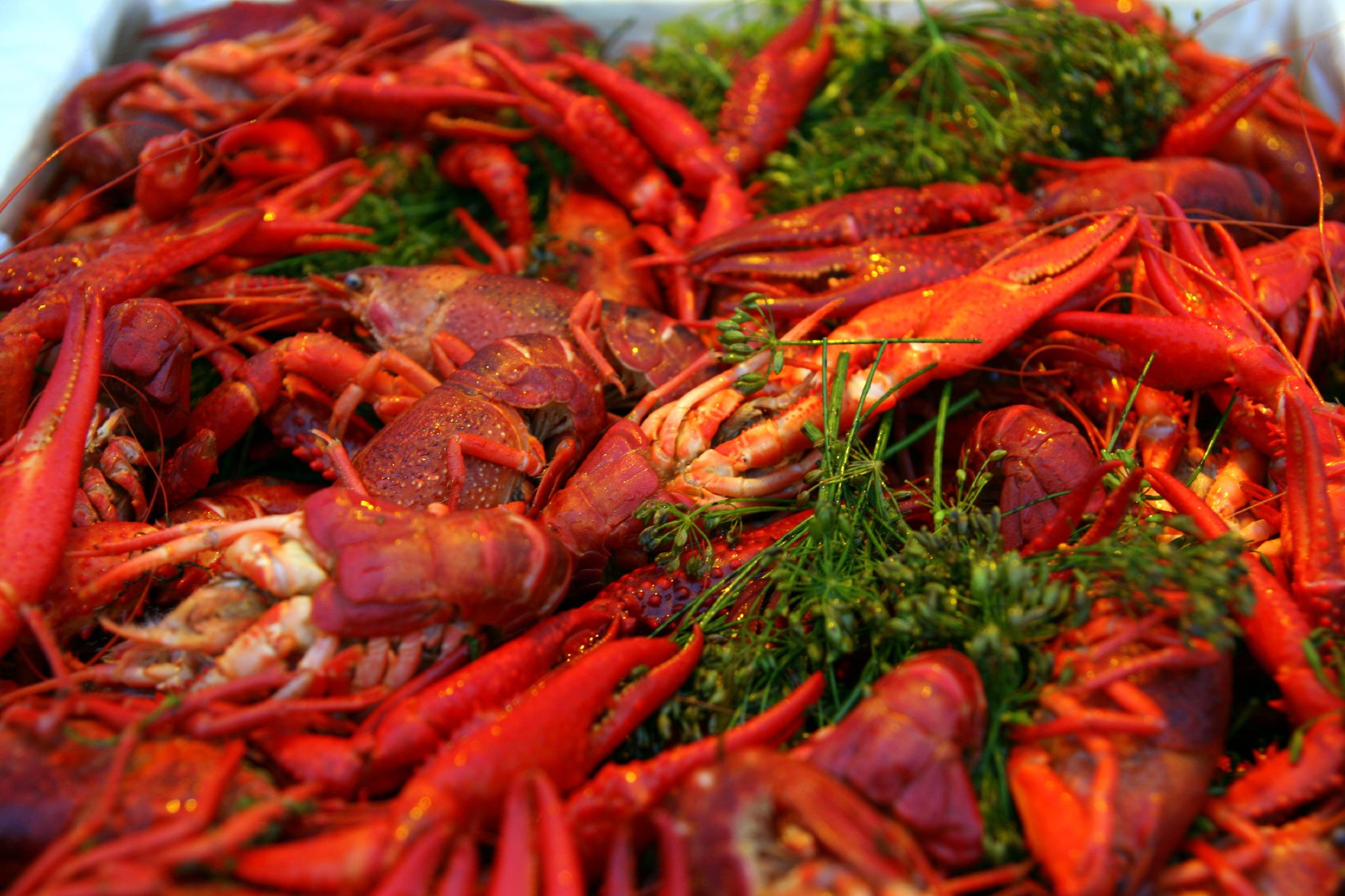Cooked_crayfish_with_dill