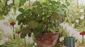 Флизелиновые обои из Швеции коллекция Scandinavian Designers III от Borastapeter под названием  KEJSARKRONA. Сочная зелень  с ярко-красными цветами рябчика, дополненная нежными белыми и розовыми цветами, создает ощущение летнего сада и радости.