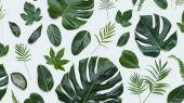 Флизелиновые фотопанно из Швеции коллекция CAPTURED REALITY No 2 от Mr.PERSWALL под названием LEAF WALL. На белом фоне изящно прорисованные тропические листья. Фотообои для гостиной, панно для спальни, фотопанно для кухни. Бесплатная доставка, купить обои, большой ассортимент