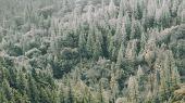 Флизелиновые фотопанно из Швеции коллекция CAPTURED REALITY No 2 от Mr.PERSWALL под названием TREETOPS. Вид на лес с высоты птичьего полета, панно насыщенного зеленого цвета. Фотообои для гостиной, панно для спальни, фотопанно для коридора. Большой ассортимент, онлайн оплата, купить обои