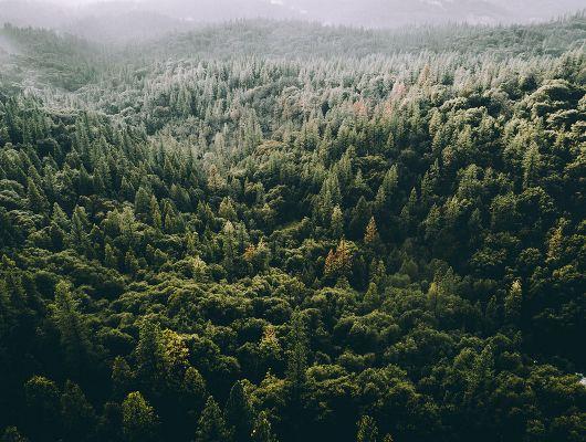 Флизелиновые фотопанно из Швеции коллекция CAPTURED REALITY No 2 от Mr.PERSWALL под названием TREETOPS. Вид на лес с высоты птичьего полета, панно насыщенного зеленого цвета. Фотообои для гостиной, панно для спальни, фотопанно для коридора. Большой ассортимент, онлайн оплата, купить обои, Captured Reality No 2, Новинки, Обои для гостиной, Обои для спальни, Фотообои