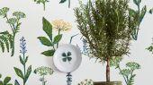 Зеленые растения на обоях белого цвета для придания комнате лета