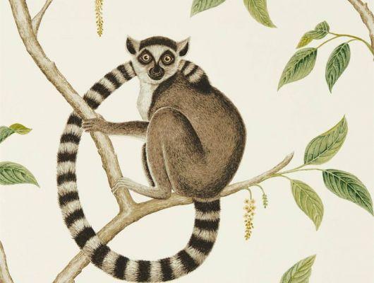 Выбрать дизайнерские флизелиновые обои для спальни Ringtailed Lemur с растительным узором и животными на светлом фоне  из коллекции The Glasshouse от Sanderson в каталоге., The Glasshouse, Обои для гостиной, Обои для кухни, Обои для спальни