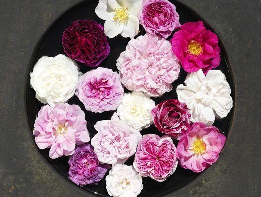 Фотообои под заказ с разнообразными розами на рисунке купить онлайн, What's Your Story, Индивидуальное панно, Обои с цветами, Хиты продаж