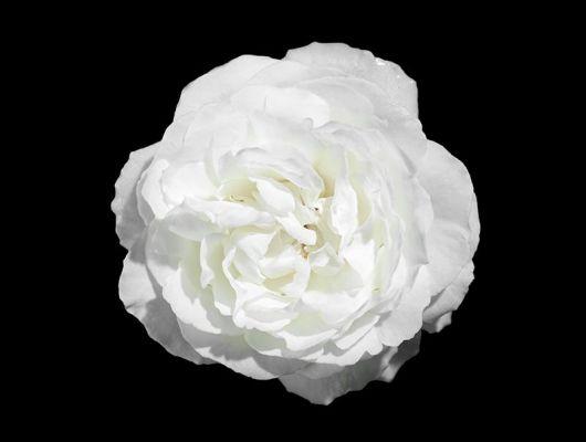 Фотообои под заказ, с огромной белой розой на черном фоне, What's Your Story, Индивидуальное панно, Фотообои