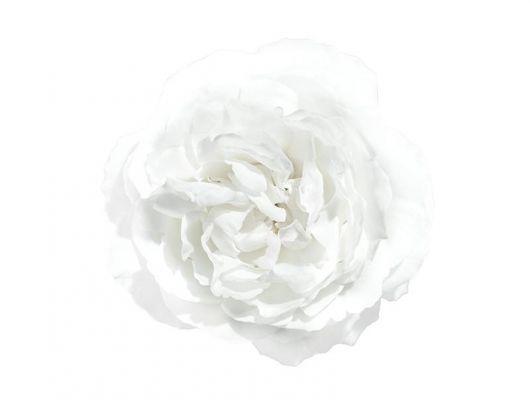 Фотопанно под заказ с фотографией нежной белой розы на белом фоне, What's Your Story, Индивидуальное панно, Фотообои