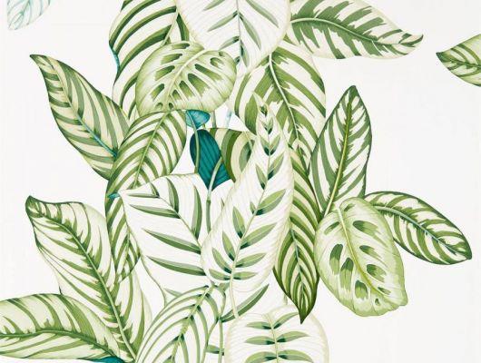 Посмотреть сочные обои с тропическими листьями для кухни дизайн Calathea арт. 216630  коллекция The Glasshouse от Sanderson в шоу-руме в Москве, The Glasshouse, Обои для гостиной, Обои для кухни, Обои с цветами