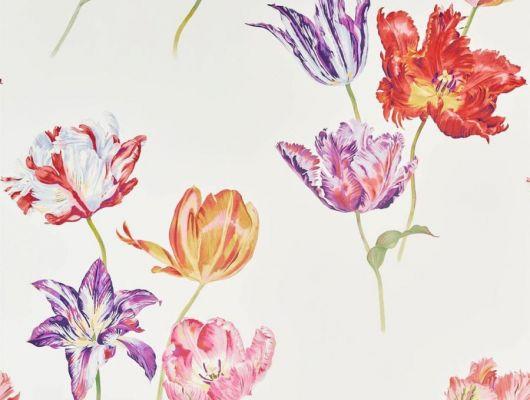 Обои Sanderson коллекция The Glasshouse дизайн Tulipomania арт. 216666, The Glasshouse, Обои для гостиной, Обои для спальни, Обои с цветами