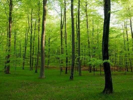 """Фотообои """"Ваш личный задний двор"""" с изображением летнего леса, благодаря разноплановой перспективе и зеленому цвету окажет благоприятное, оздоравливающее влияние на глаза., Creativity & Photo Art, Обои для гостиной, Фотообои"""
